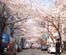 桜丘町─桜並木に包まれた音楽の街